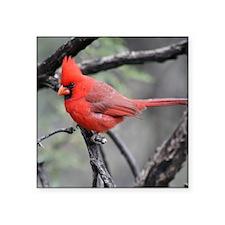 Cardinal in Sabino Canyon Sticker