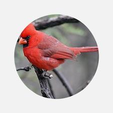"""Cardinal in Sabino Canyon 3.5"""" Button"""