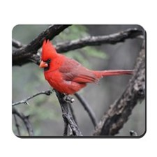 Cardinal in Sabino Canyon Mousepad