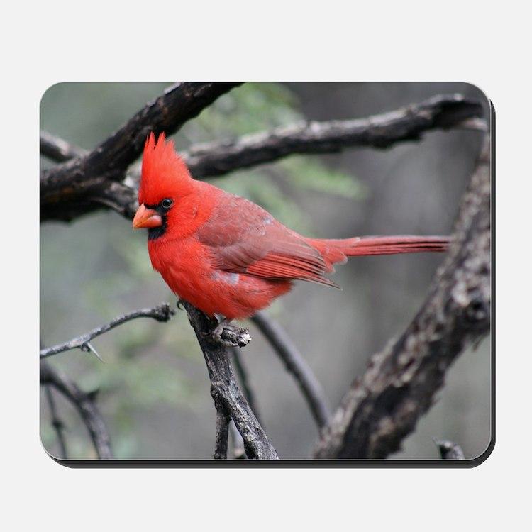 Cardinal in Sabino Canyon Mousepad