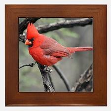 Cardinal in Sabino Canyon Framed Tile