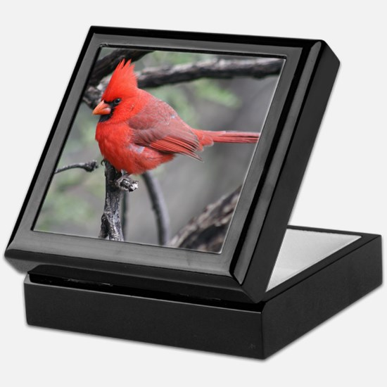 Cardinal in Sabino Canyon Keepsake Box