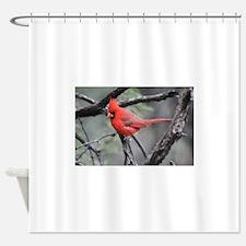 Cardinal in Sabino Canyon Shower Curtain