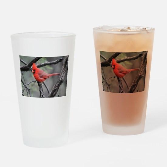 Cardinal in Sabino Canyon Drinking Glass
