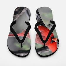 Cardinal in Sabino Canyon Flip Flops