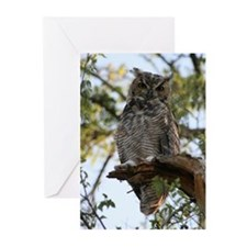 Great Horned Owl Greeting Cards