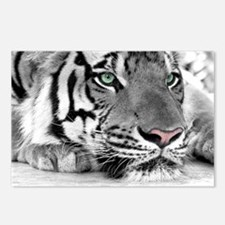 Lazy Tiger Postcards (Package of 8)