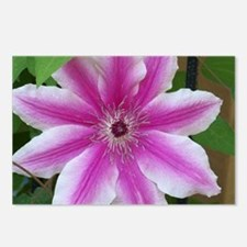 Pink Clematis Postcards (Package of 8)