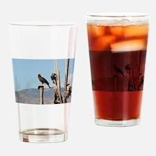 Harris Hawk Drinking Glass