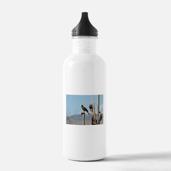 Harris Hawk Water Bottle