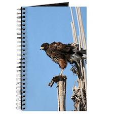 Harris Hawk Ruffling Feathers Journal