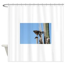 Harris Hawk Ruffling Feathers Shower Curtain
