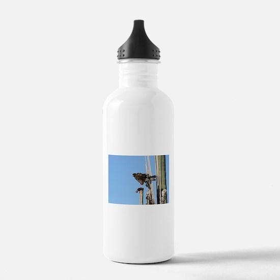 Harris Hawk Ruffling Feathers Water Bottle