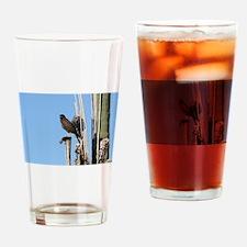 Harris Hawk in Arizona Drinking Glass