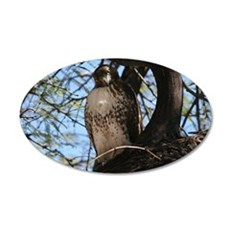 Red-tailed Hawk Staring Wall Decal