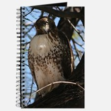 Red-tailed Hawk Staring Journal