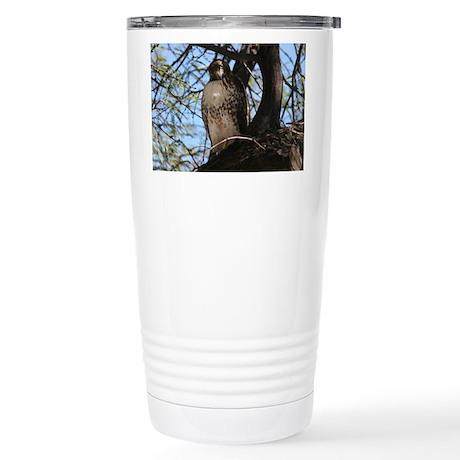 Red-tailed Hawk Staring Travel Mug