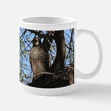 Red-tailed Hawk Staring Mugs