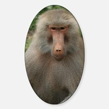 See You Soon, Baboon Sticker (Oval)