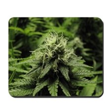 Blooming Bud Mousepad