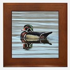 Male wood duck Framed Tile