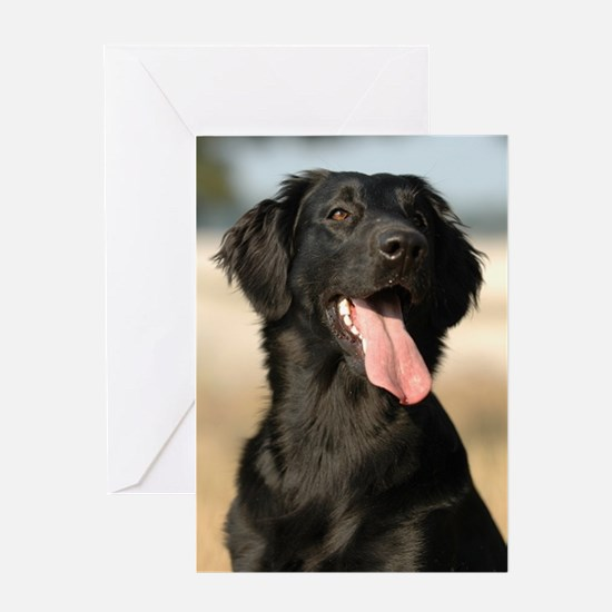 flat coated retriever Greeting Cards