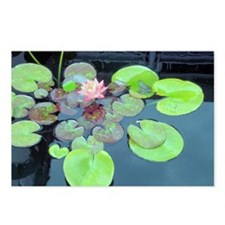 Lily Pads with Frog Postcards (Package of 8)