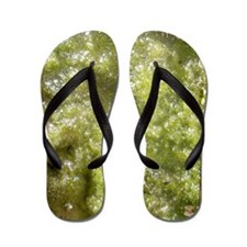 Slimy & Gross Flip Flops