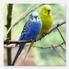 "Budgie Square Car Magnet 3"" x 3"""