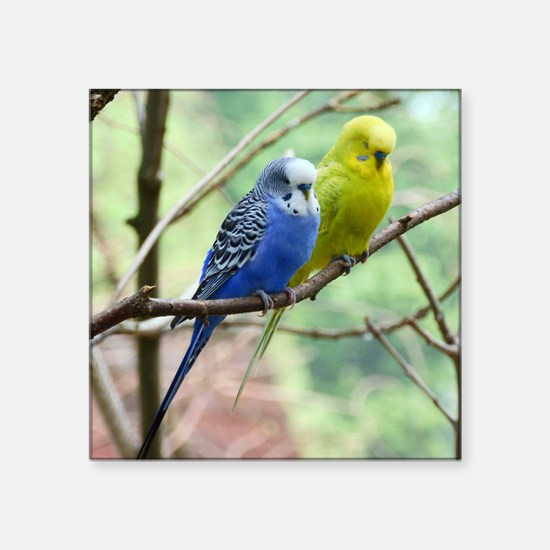 "Budgie Square Sticker 3"" x 3"""