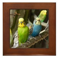 Budgie Framed Tile