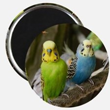 Budgie Magnet