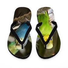 Budgie Flip Flops