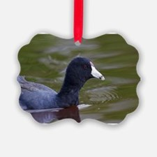 Coot Ornament