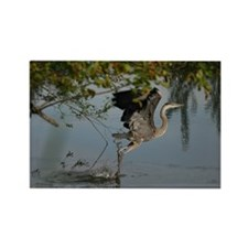 Great Blue Heron Takes Flight Magnets