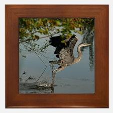 Great Blue Heron Takes Flight Framed Tile