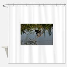 Great Blue Heron Takes Flight Shower Curtain