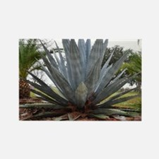 Agave Rectangle Magnet