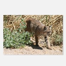 Bobcat Walking Postcards (Package of 8)