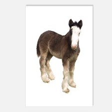 Foal Postcards (Package of 8)