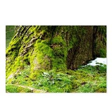 Mossy Tree Postcards (Package of 8)