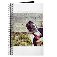 Instant Iggy! Journal