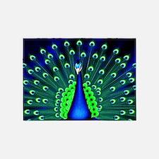Pretty Peacock 5'x7'Area Rug