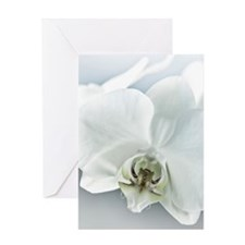 White Orchid Flower Greeting Cards