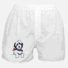 Parti Havanese Art Boxer Shorts