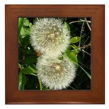 Dandelion Flower Framed Tile
