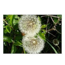 Dandelion Flower Postcards (Package of 8)