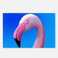 Pink Flamingo Portrait Close Up Postcards (Package