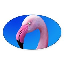 Pink Flamingo Portrait Close Up Decal