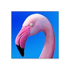 Pink Flamingo Portrait Close Up Sticker